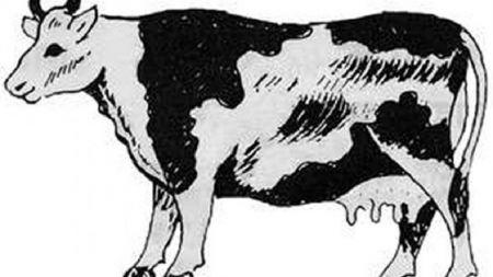 भारतमा रोगका कारण ४० गाई मरे