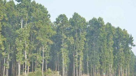 नेपालको वन संरक्षणमा कोरियाले सहयोग गर्ने
