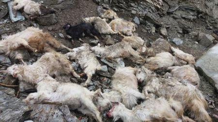भेडी गोठ पहिरोले पुरिँदा २३ भेडा मरे