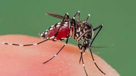म्याग्दीमा फैलँदैे डेंगुको प्रकोप, वैशाखयता ५० जनामा संक्रमण