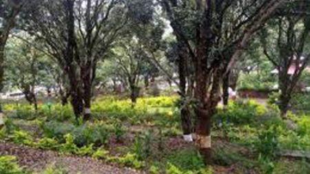 वाग्मती नगरपालिकाले १८० बिघामा नगर बगैँचा वनाउने