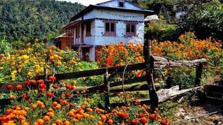 पर्यटक पल्काउन कोसेली घर